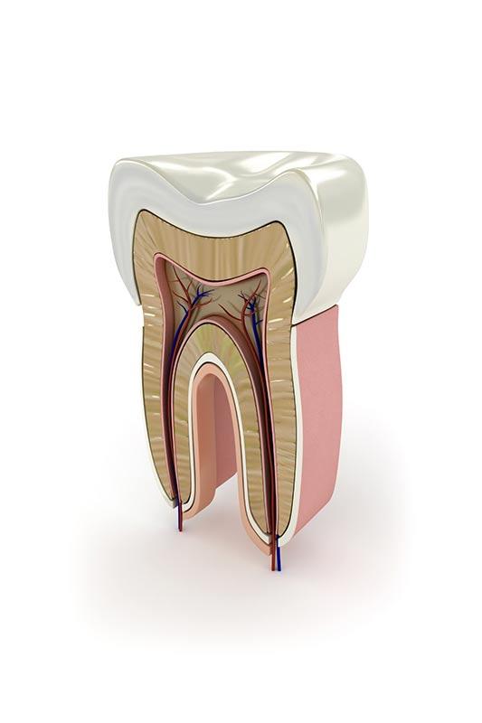 endodoncia2